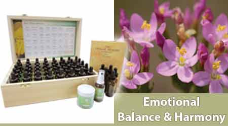 Buy Bach Flower Remedies - Shop