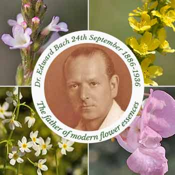 Dr Edward Bach with vervain, agrimny, impatiens & water vile flowers in the background