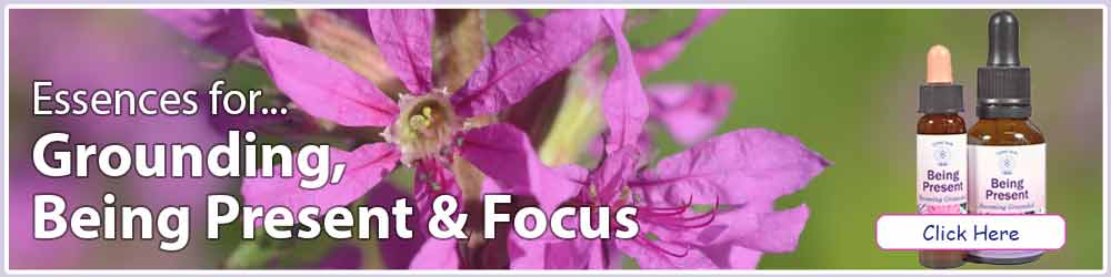Essences for Grounding, Being Present & Focus