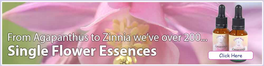 Single Flower Essences