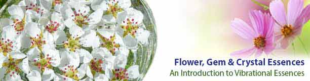 Flower Essences - An Introduction
