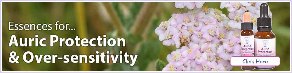 Yarrow flowers, essence bottles and text - Auric Protection & Oversensitivity